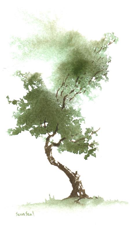 Zen Drevo